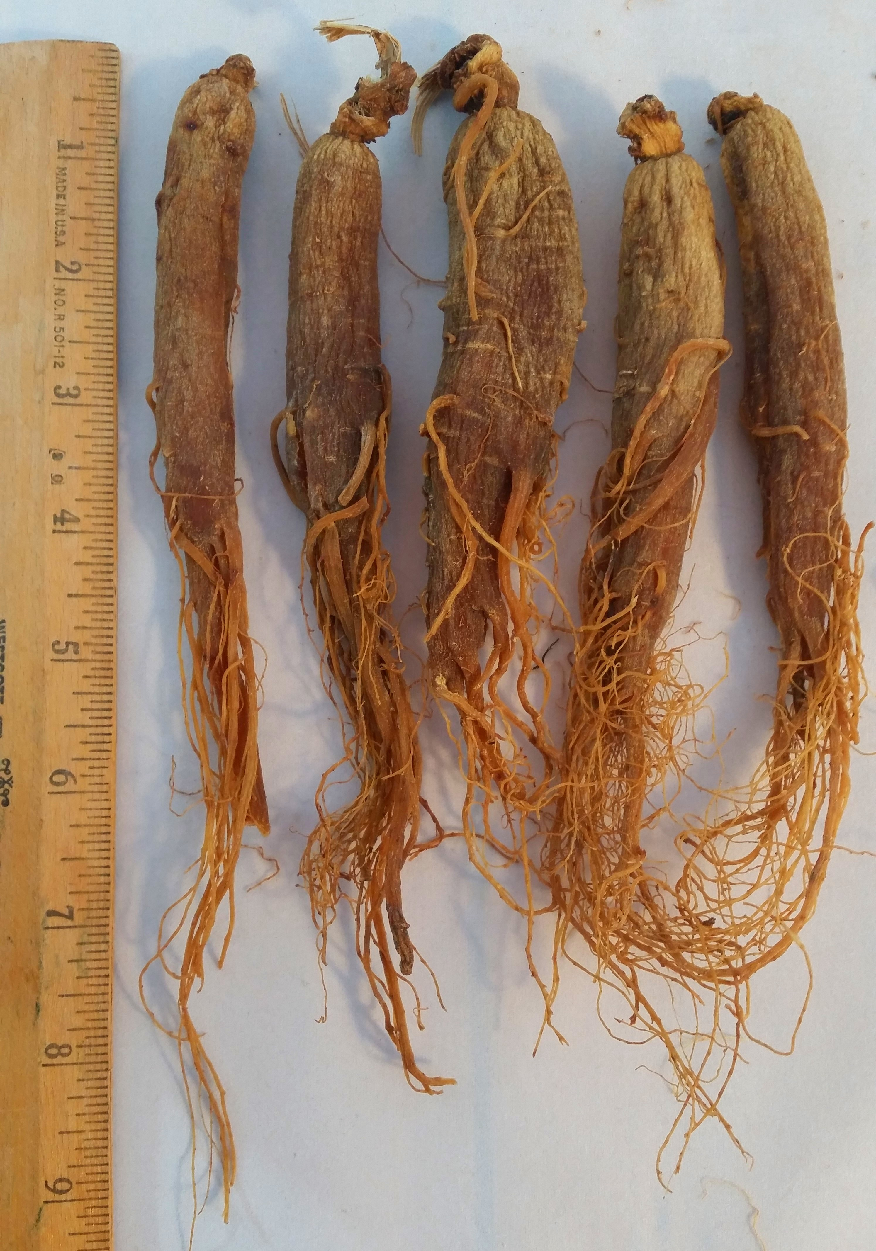 Red Panax Ginseng 6 Years Old Ginsengstoreandmore